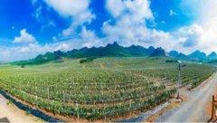 第二届中国(南宁)火龙果品牌大会即将召开