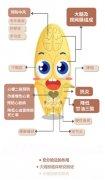 科学证据全汇总:鱼油(欧米伽-3)有哪些好处?