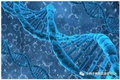 具研究表明:干细胞的作用远远不止美容抗衰老这么简单!