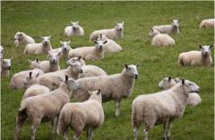 中国牛羊肉商城:互联网模式升级,塑造行业新生态