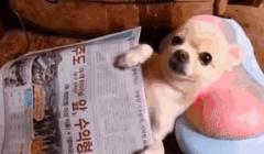 如何帮助幼犬安全渡过年少时期