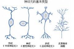 <b>说不清的渐冻人,运动神经元该怎么办?北京辰星中医是怎么治疗运动神经元的</b>