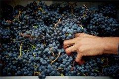 这些葡萄酒酿造工艺,你都了解吗?