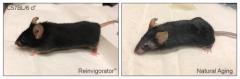 首个经科学验证NAD+ 前体NMN衰老抑制剂瑞维拓问世,长寿时代指日可待